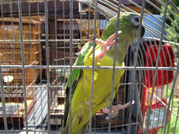 Entre as aves apreendidas estava um maracanã (Foto: Walter Paparazzo/G1)