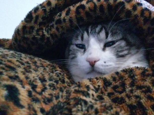 O gatinho Marrom sempre dorme embaixo da coberta de oncinha no frio em Sales de Oliveira (Foto: Angélica Poloni/ VC no G1)