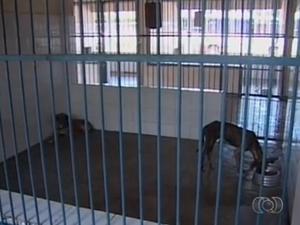 Cães podem ser adotados no CCZ de Palmas (Foto: Reprodução/TV Anhanguera)