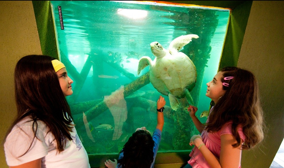 Crianças observam tartaruga no Oceanário de Aracaju (SE) (Foto: Divulgação)