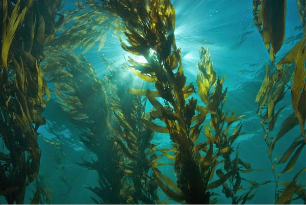 Algoterapia é um tratamento a base de algas que faz detox para os fios  (Foto: Divulgação )