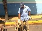 Cachorrinha vira-lata ajuda na coleta de lixo e vira atração no interior de SP