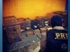 Operação da PRF detém 28 pessoas por crimes ambientais na Paraíba