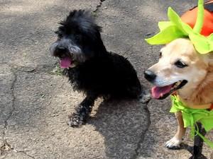 Alê encontrou outros cães com histórias de superação (Foto: Patrícia Alcoléa/Arquivo pessoal)