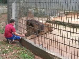 Criança estava brincando com os animais (Foto: Edmar Vieira/ Arquivo pessoal)