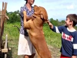 Famílai conta que Tupi era dócil e costumava brincar com crianças e com os outros animais (Foto: Reprodução/RBS TV)