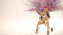 Cão com paralisia imita 'Globeleza'; veja vídeo (Patrícia Alcolea/Arquivo pessoal)