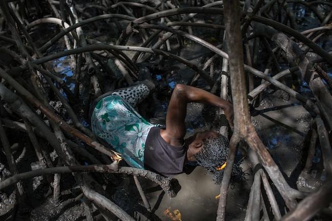 Extrativista com a mão no mangue para pescar o caranguejo