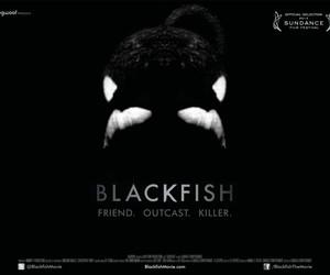 """Cartaz do documentário """"Blackfish"""" (Foto: Reprodução)"""