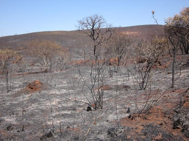 Parque do Rola-Moça após incêndio que atingiu 80% de sua área, em setembro de 2011. (Foto: Divulgação)