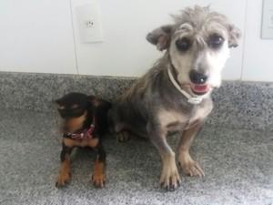 Brad Piche e pedrita, adotados pelo veterinário Roberto Macedo (Foto: Juliana Gorayeb/G1)