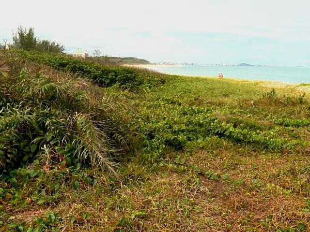 Próxima praia a receber a poda (Foto: Reprodução/ TV Gazeta)