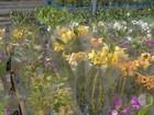 Produtores de Mogi se animam com florada de orquídeas