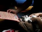 México ganha 'café com gatos'
