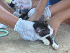 Cães e gatos são vacinados contra raiva em Guajará neste sábado, 22