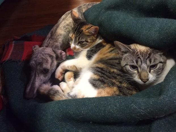 Sete coisas para saber antes de adotar um gato (Foto: Thinkstock)