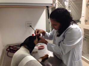 Médica veterinária cuida da cadela Lua em clínica (Foto: Arquivo pessoal/Mariana Miranda)