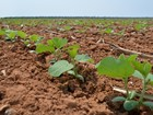 Soja Plus 'abraçará' 90% da produção brasileira de soja, diz Abiove