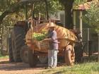 Polícia apura se produtores de Itápolis foram usados na fraude da merenda