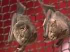 Morcego com vírus da raiva é achado em bairro da Zona Norte do Rio