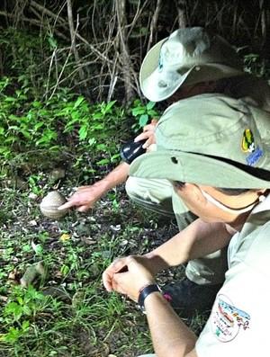 Guardas da reserva encontram um tatu-bola durante a madrugada (Foto: Diego Morais / Globoesporte.com)