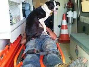 Cadela teve que ser levada dentro de ambulância do Samu após acidente em Santa Gertrudes (Foto: Jefferson Alves/Arquivo Pessoal)
