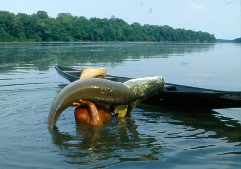 peixes_pirarucu (Foto: Ernesto de Souza/Ed. Globo)