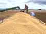 Reveja no Amazônia Rural de férias a produção de soja; neste domingo (22)