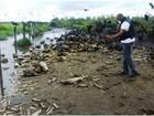 Operação conjunta coíbe abate clandestino de gado bovino no Pará