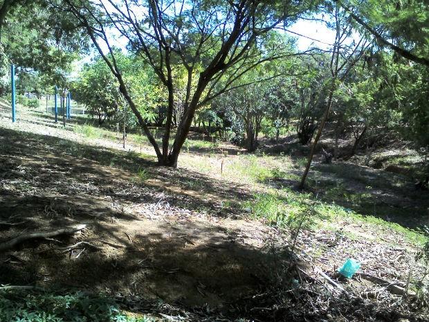 Bosque abandonado em Cerquilho (Foto: Erika de Araújo Soares/Vc no G1)