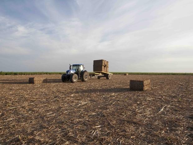 Palha da cana-de-açúrcar já está sendo estocada no litoral Sul de Alagoas para produção de etanol de segunda geração (Foto: Cortesia/ GranBio)