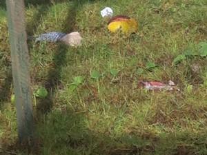 Contador encontrou ursinho em terreno baldio (Foto: Lucas Rocha/ Reprodução)