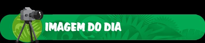 headers Copa 2014 IMAGEM DO DIA (Foto: infoesporte)