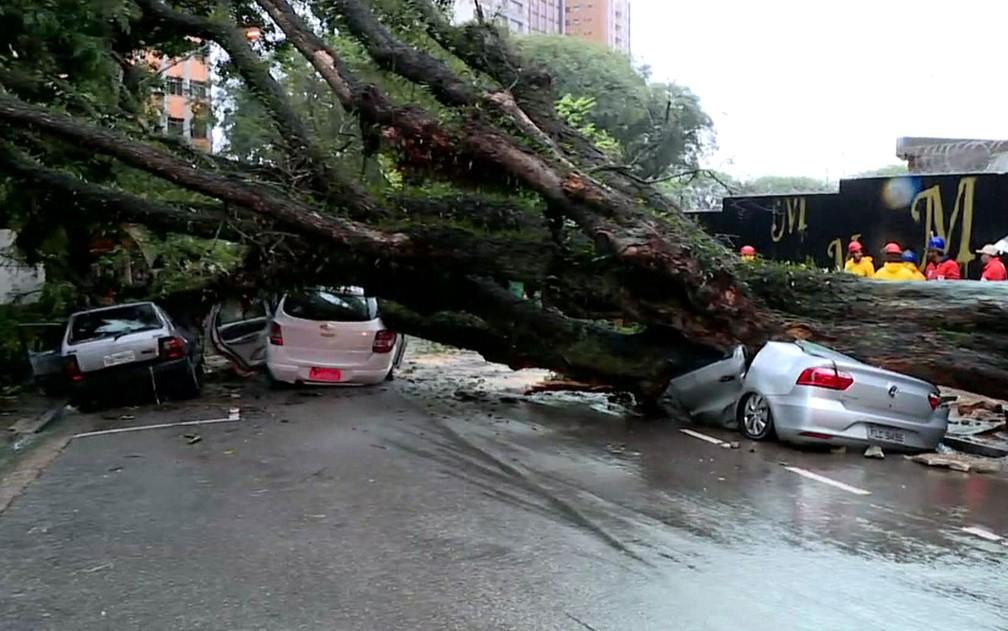 Árvore que caiu na rua Itapeva atingiu ao menos três carros (Foto: Reprodução/TV Globo)
