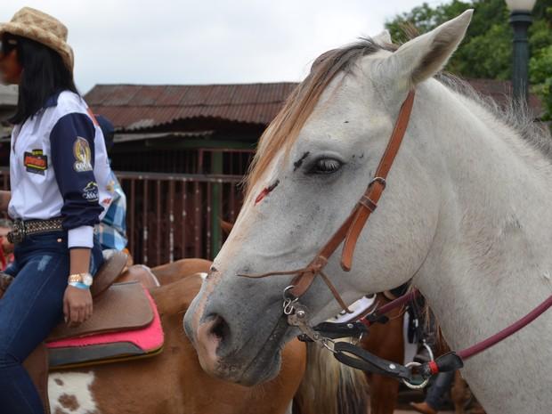 Cavalo está com ferimento (Foto: Rayssa Natani/G1)