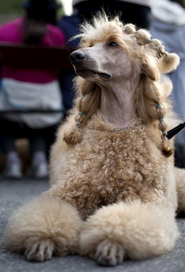 Um cão chamou atenção durante um evento canino no domingo (16) em Estocolmo, na Suécia, por causa das trancinhas feitas em seu pelo. (Foto: Jonathan Nackstrand/AFP)