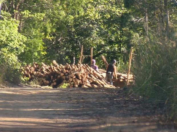 Flagrante de furto de madeira no Norte do estado (Foto: Reprodução/ TV Gazeta)