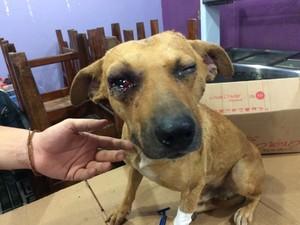 Cachorro está com risco de perder o olho direito (Foto: Victor Hugo Fernandes / Arquivo Pessoal)