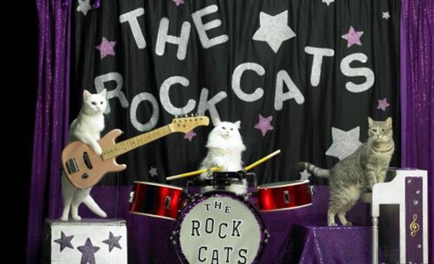 Muitas vezes, gatos desistem de seguir o roteiro e decidem simplesmente passear na plateia (Foto: Divulgação/Amazing Animals)