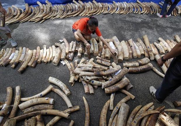 Comércio de marfim foi proibido pela ONU em 1989. Regra, no entanto, não se dirige aos mercados domésticos (Foto: Agência EFE)