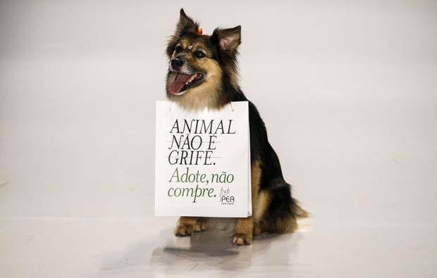 Cachorro na SPFW (Foto: Agência AFP)
