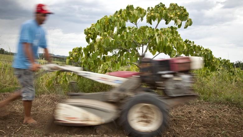 agricultura_familiar (Foto: Marcelo Curia / Ed. Globo)