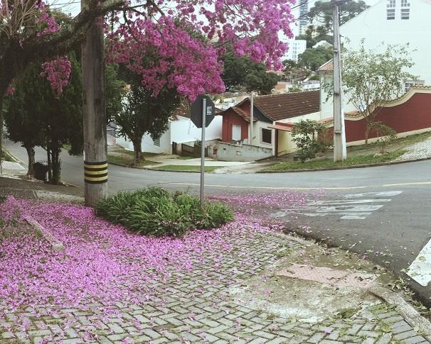 Fotografe as cores da sua cidade, a paisagem do Paraná... Você pode aparecer nas nossas mídias sociais e na TV (Foto: Divulgação/RPC)