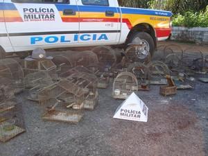Pássaros foram apreendidos em Oliveira (Foto: Marcelo Praxesdes/Divulgaão)