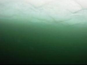 Nasa descobre extensa camada de fitoplâncton no gelo do Ártico (Foto: Nasa/Reprodução)