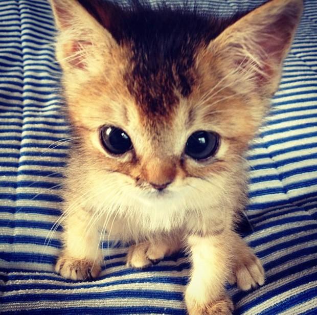 Dono afirma que gatinha está ganhando peso e se recupera bem dos ferimentos (Foto: Reprodução/Instagram/shimejiwasabi)
