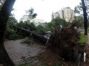 Árvores foram derrubadas em Porto Alegre com o forte temporal (Foto:  Ivo Gonçalves/PMPA)