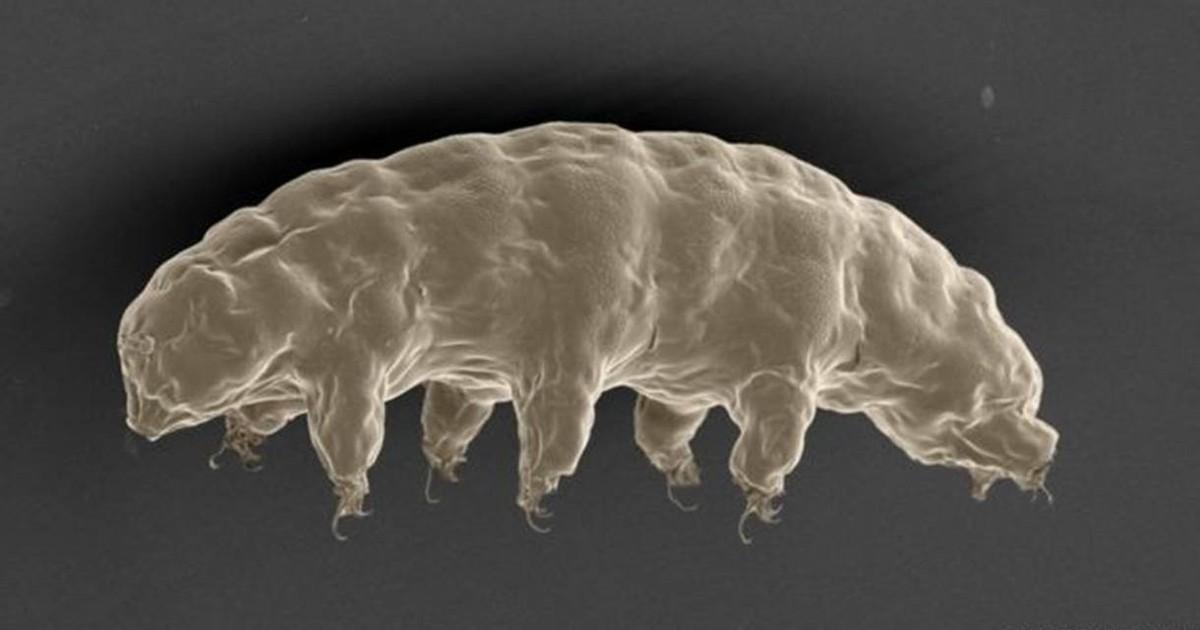 Cientistas descobrem o segredo do animal mais resistente do mundo
