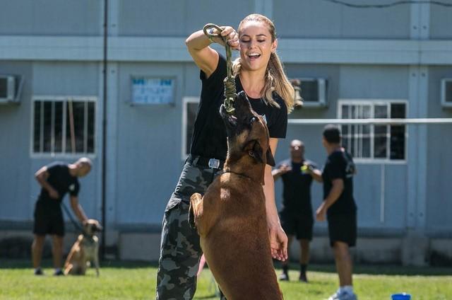 Paolla Oliveira treina com pastor alemão no Batalhão de Ações com Cães (BAC) para 'A força do querer' (Foto: Raquel Cunha/TV Globo)