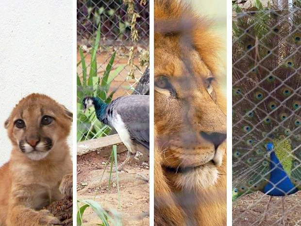Zoológico de Varginha, MG, conta com 400 animais (Foto: Reprodução/ EPTV)